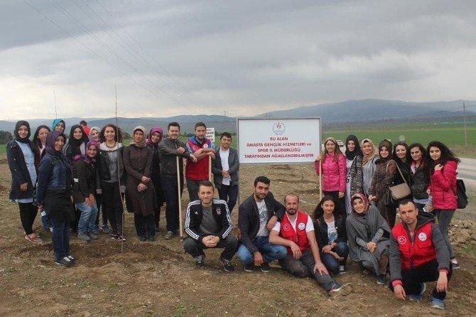 Amasyalı Gençler 600 Fidan Dikti