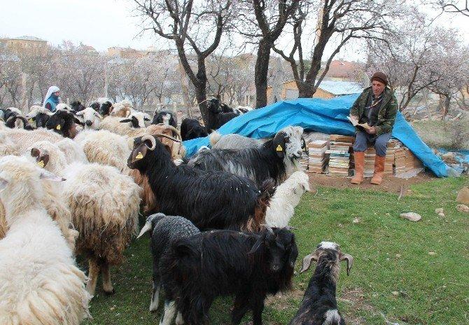 63'lük Çoban Yarıda Bıraktığı Üniversiteye Tekrar Başladı