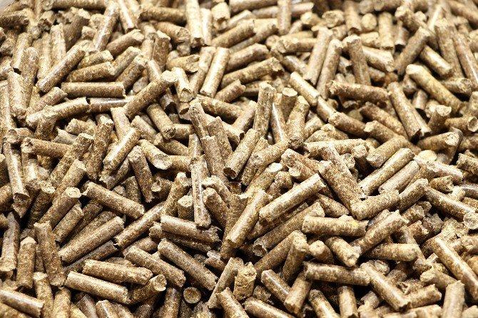 Domates, Biber Ve Patlıcan Sapından Milyonluk Gelir