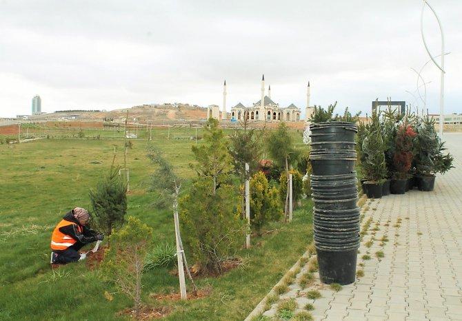 Ahi Evran Üniversitesi'nde ağaçlandırma seferberliği
