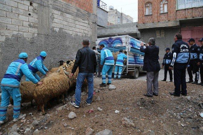 Ekinci, Şehir İçindeki Hayvanların Tahliyesini Yerinde İzledi
