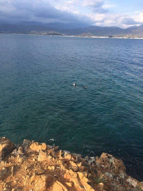 Fethiye Körfezinde Fok Balığı Görüntülendi