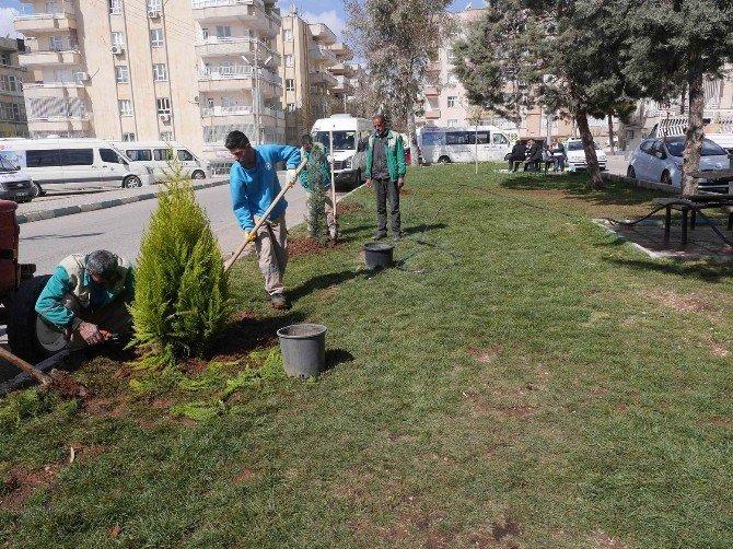 Haliliye Belediyesi Yeşillendirme Çalışmalarını Sürdürüyor