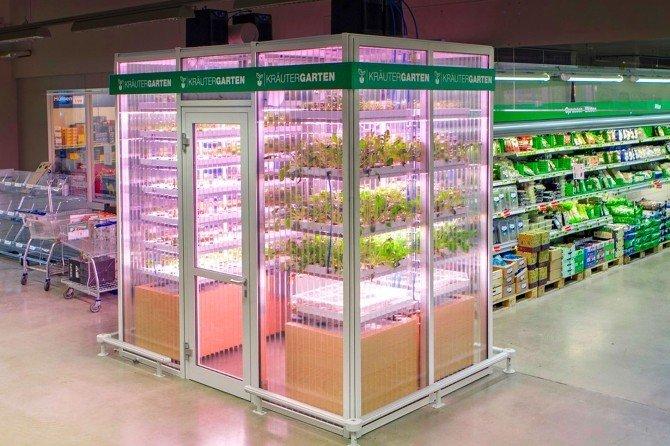 Artık Sebzeler Market Reyonlarında Yetişecek