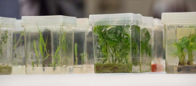 Bakanlık nesli tükenmekte olan bitkiler için doku kültürü laboratuvarı yapacak