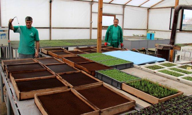Çankaya Belediyesi, 600 bin çiçek üretecek