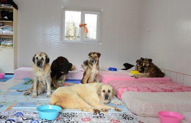Sokak Hayvanları Daha Donanımlı Bir Bakım Evine Kavuştu