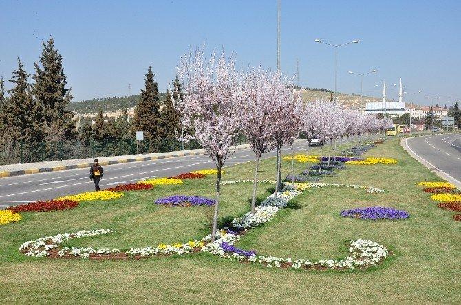 Büyükşehir , 1 Milyon Metrekare Alanı Ağaçlandırdı