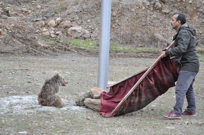 Çaya Düşen Yavru Ayıyı Vatandaşlar Kurtardı