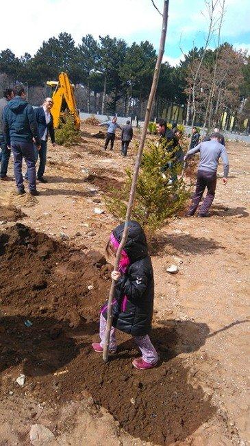 Tatvan'da Ağaçlandırma Çalışması