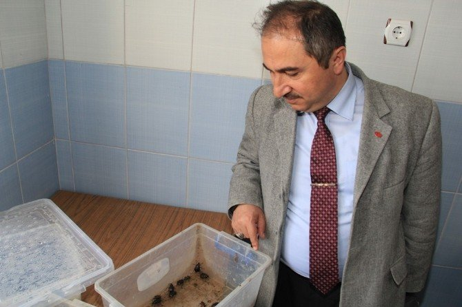 Terminatör Böcekler İşbaşında