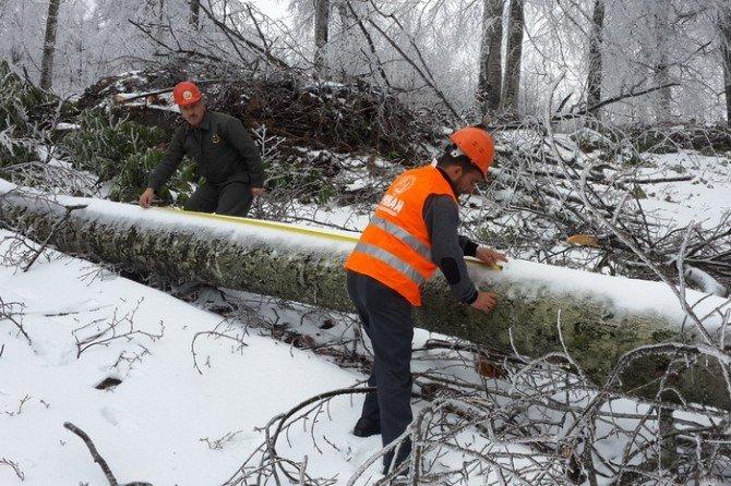 Gölyaka'da Kar Üstünde Işık Kesimi