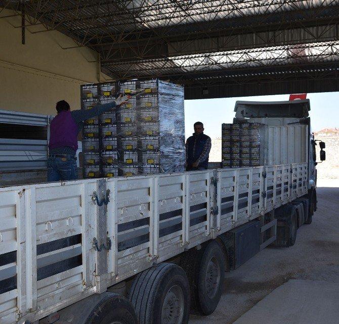 Korkuteli Elması Ve Armudu Suriye, Ürdün Ve Rusya Pazarında