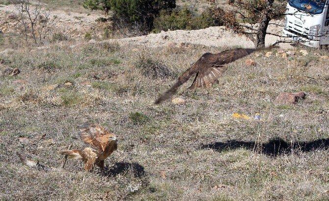 Kızıl Şahinler Doğayla Buluştu