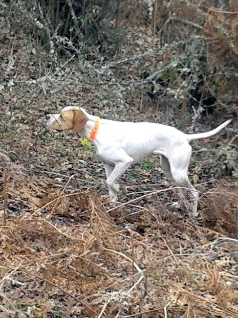 Fermalı Av Köpekleri Salihli'de Yarışacak
