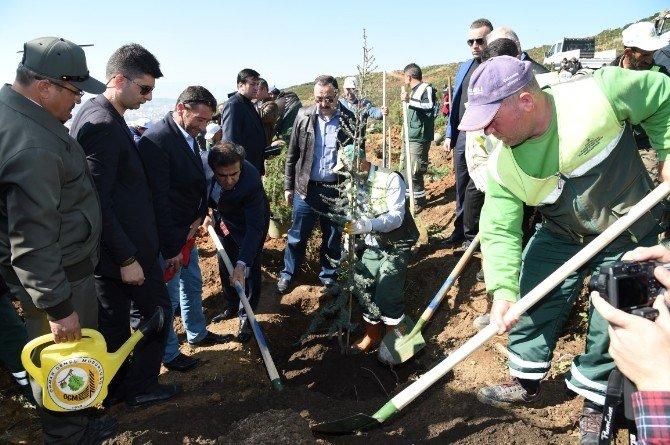 Gebze'de Şehitler Anısına Fidan Dikimi Yapıldı