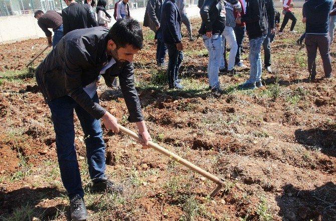 Üniversiteli Gençler, Fidanları Toprakla Buluşturdu
