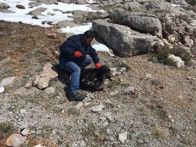 Konyaaltı Belediyesi'nden Ölmek Üzere Olan Köpeklere Yardım Eli