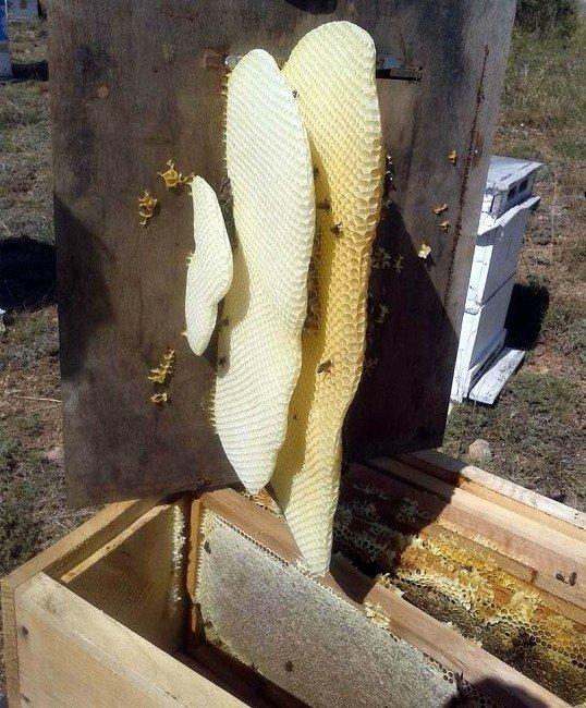 Arıcılar Yeni Sezona Kayıpsız Başladı