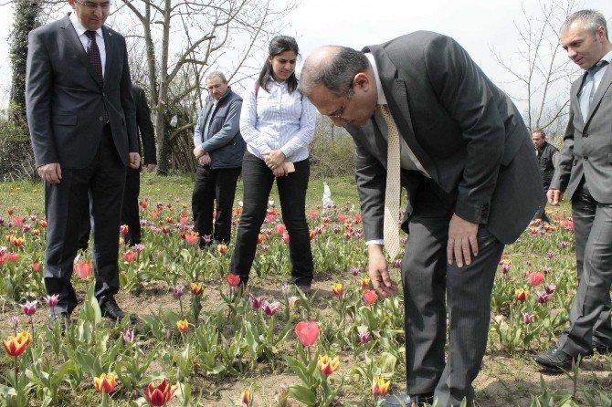 Vali Ali Kaban Çaycuma'da Lale Üretim Alanlarını İnceledi
