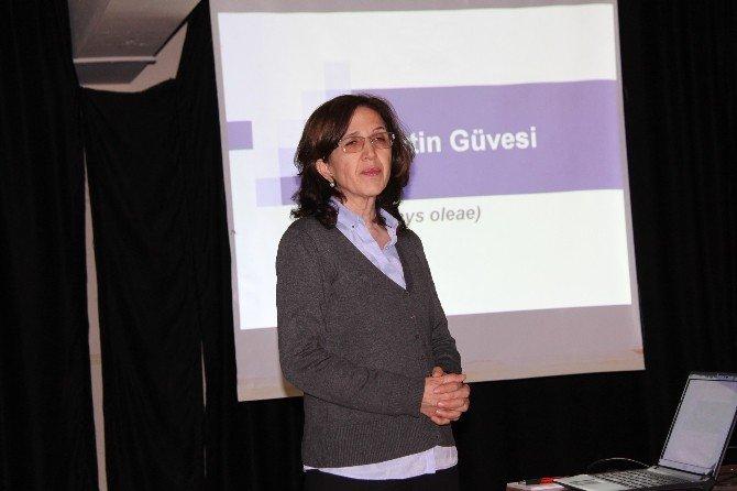 Didim'de Zeytin Bilgilendirme Toplantıları Sürüyor