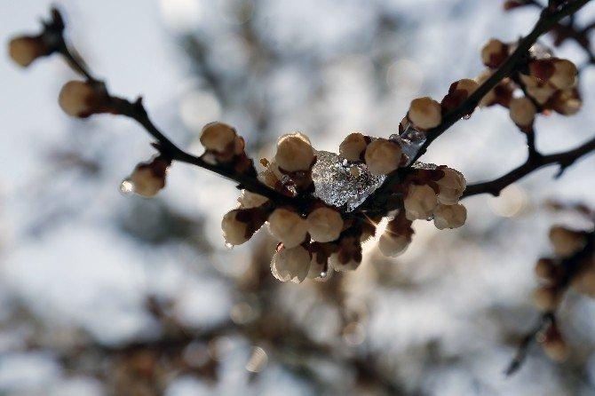 Gümüşhane'de Çiçekler Buz Açtı