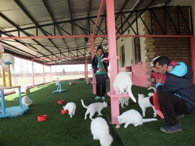 İranlı Turistlerden Van Kedilerine Yoğun İlgi