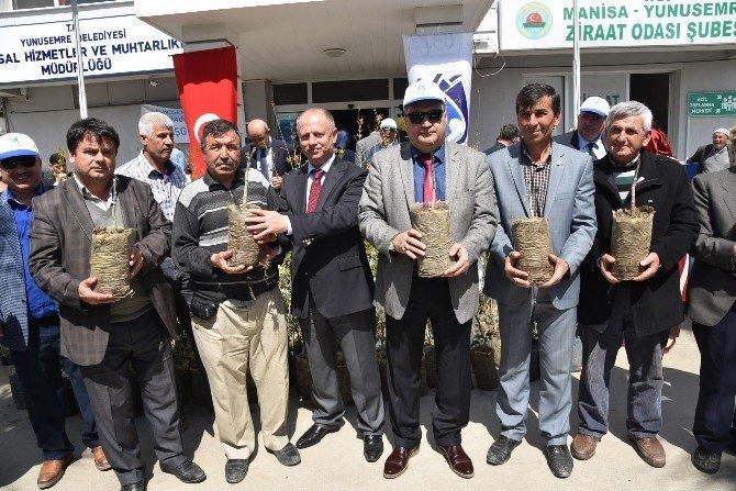 Yunusemre'den Üreticilere 20 Bin Fidan