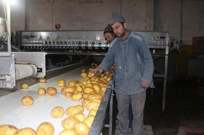 Depoda Kalan Patatesler 5 Ülkeye İhraacat Ediliyor