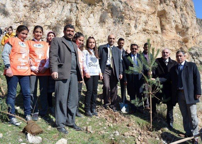 Öğrenciler Çam Fidanlarını Toprakla Buluşturdu