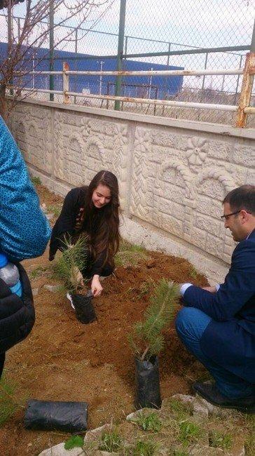 Öğrenciler, Okul Bahçesine Fidan Dikti