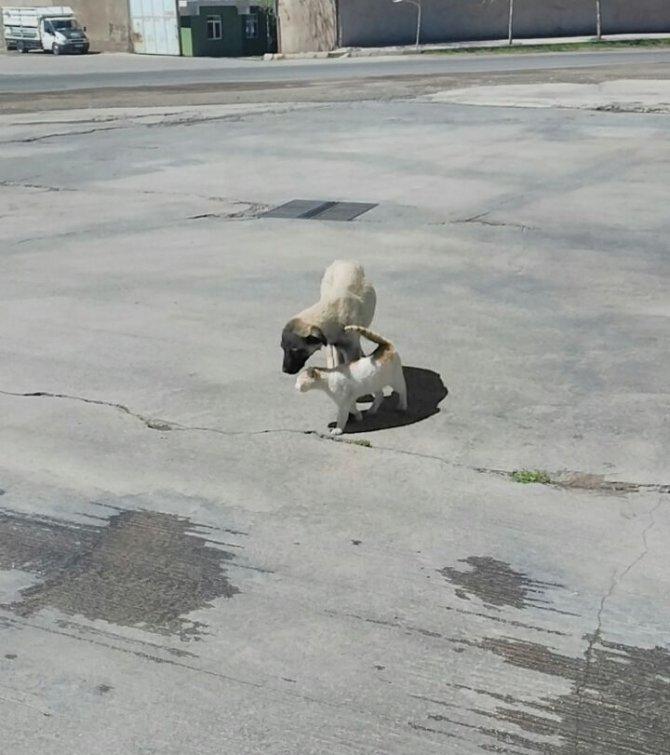 Kedi ve köpeğin dostluğu şaşırtıyor