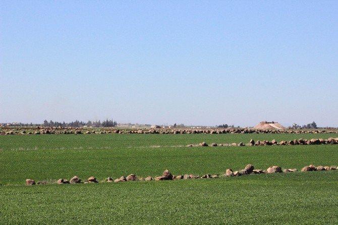 Koalisyon Güçleri Uçaklarla, Muhalifler De Karadan IŞİD'i Vuruyor
