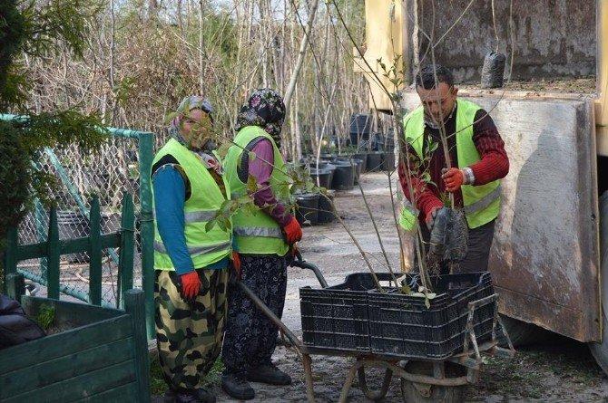 Park Ve Yeşil Alanlara 2 Bin 500 Fidan
