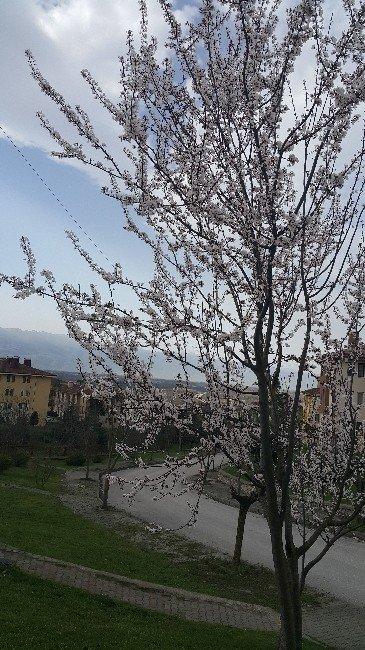 Hoş Geldin Bahar