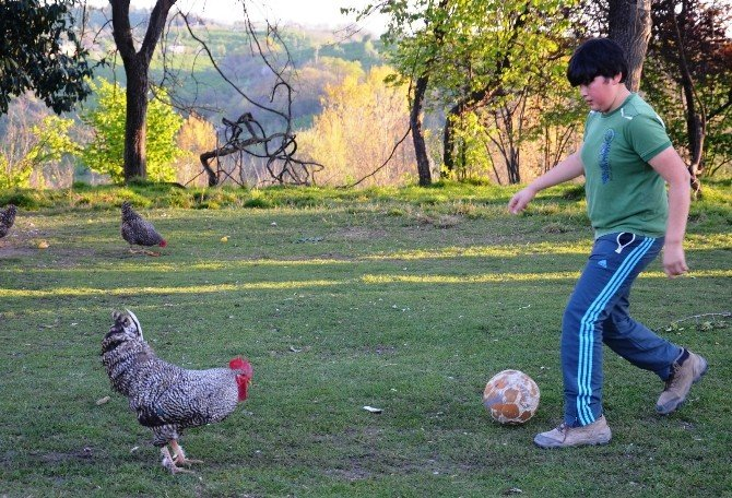 Futbol Sihirbazı 'Horozoviç'