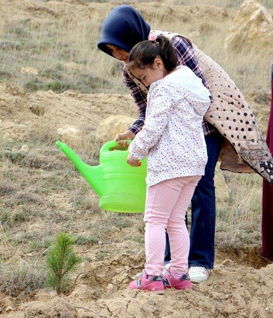 Çankırı'da AK Partili Gençler 4 Bin Fidan Dikecek