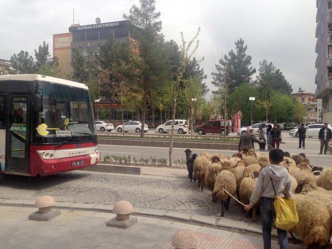 Şehrin modern caddesinden geçen sürü herkesin dikkatini çekti