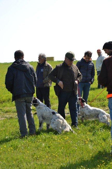 Biga'da Av Köpekleri Yarışması Düzendi