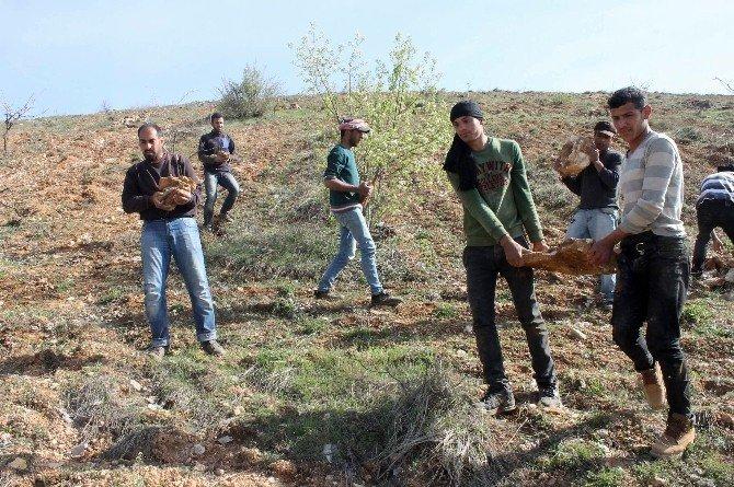 Suriyeli Gençler Ekmeğini Taştan Çıkarıyor