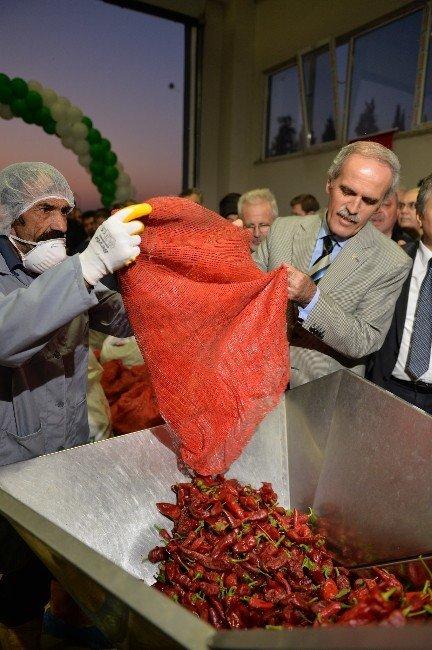 Besaş'tan Tarladan Sofraya Kırmızı Biber