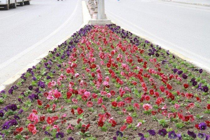 Erzincan'da 250 Bin Adet Çiçek Toprakla Buluşacak