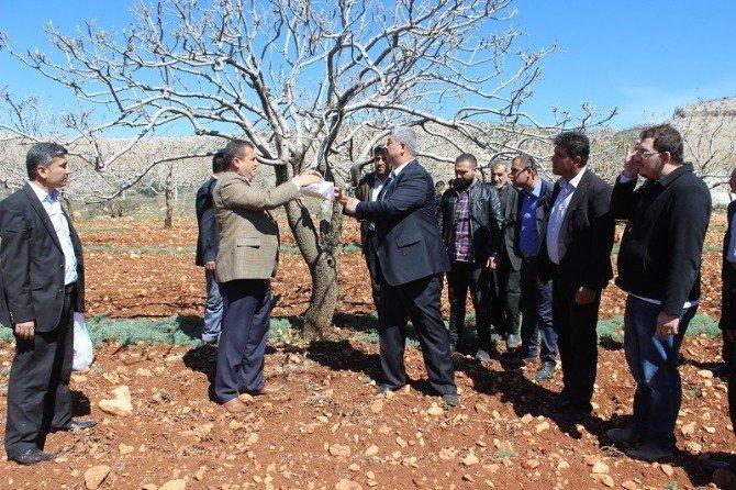 """Gaziantep Fıstık Yetiştiricileri İçin """"Feromon Tuzak"""" Devri Başlıyor"""