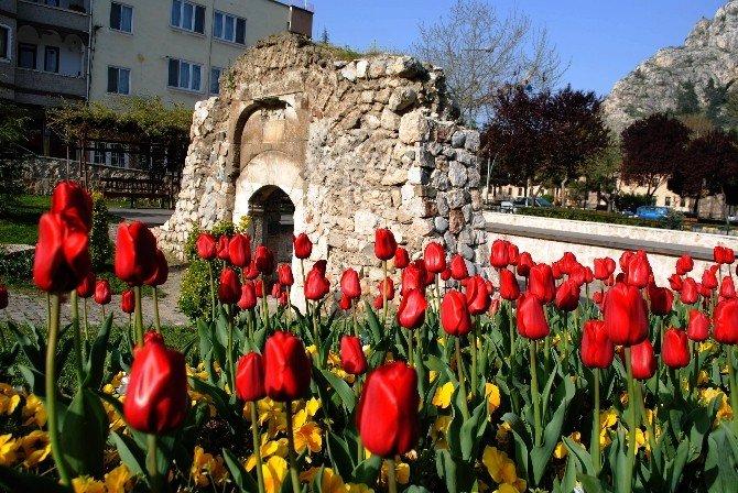 Amasya'da 60 Bin Lale Açtı