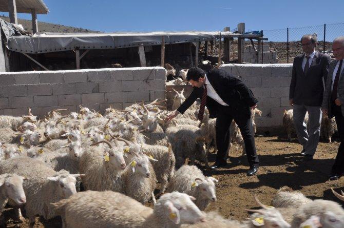 Çiftçi artık tiftik ve yapağının kalitesini kendi ölçecek
