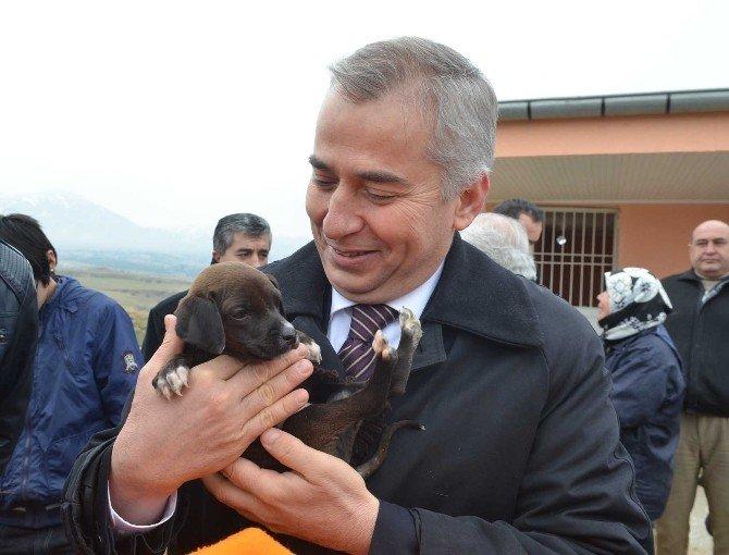 Denizli'de 3 Ayda 300 Sokak Hayvanı Sahiplendirildi