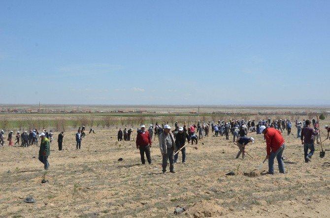 Ereğli'de 6 Bin Fidan Toprakla Buluşturuldu