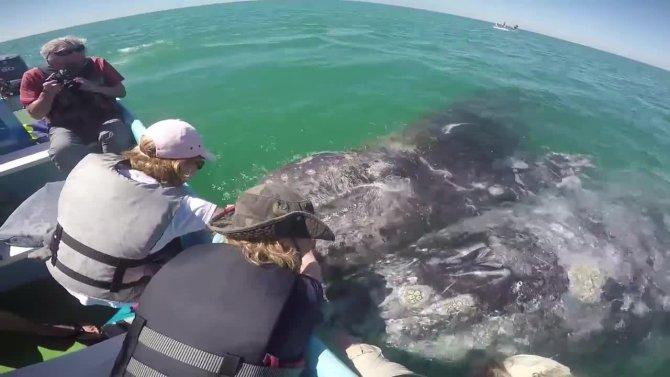 Dev balinalar ile yakın temas kamerada