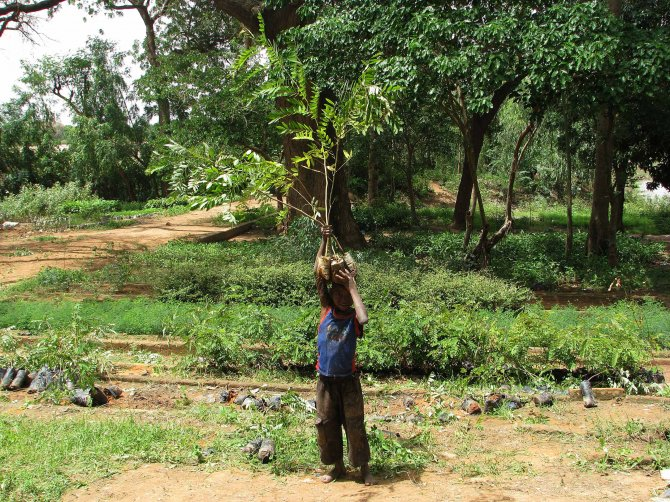 Bakan Eroğlu: Afrika'da 9 milyon kişiye sağlıklı içme suyu temin edildi
