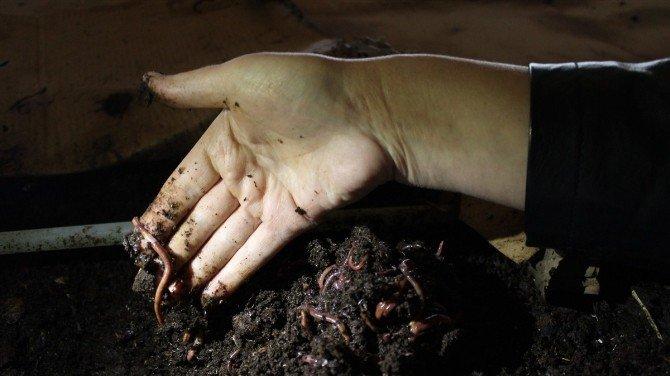 Tutlu Kadın Çiftçiler Solucan Gübresi Üretiyor